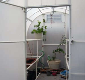 Debbie sent us this picture of her Solexx Greenhouse.