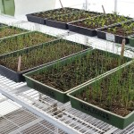 Seedlings started for Marion County Food Bank