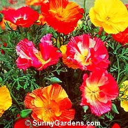 Summer Annuals 1124[1]