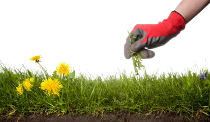 Natural Way To Kill Grass In Garden