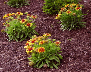 mulch-greenville-sc-2[1]