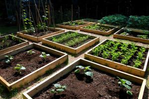 raised-vegetable-garden-beds[1]
